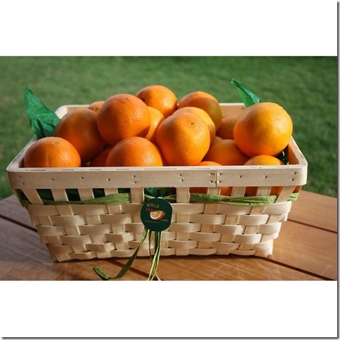 geschenkkorb_Citrus_Ricus
