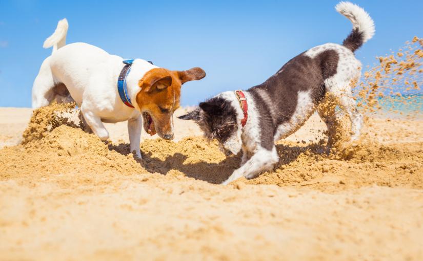 Unvergessliche Urlaubstage mit dem Hund – Aber auf einige Mitbringsel kann man gut verzichten