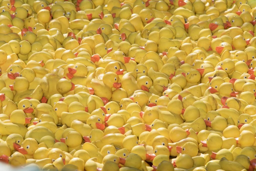 Entenrennen im Europa-Park